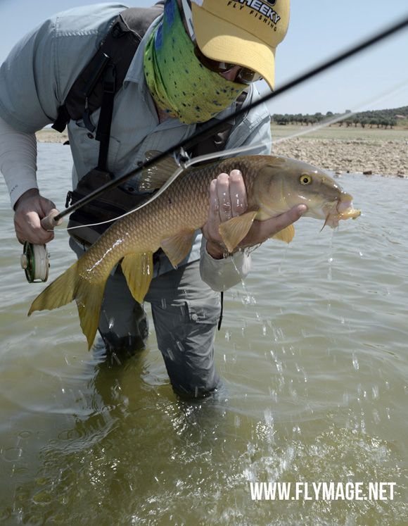 Flymage Fly Fishing Magazine - Fly fishing at 40° C. Worth it? - www.flymage.net #flyfishing #flyfishingmagazine #barbel #spain #photography @flymage