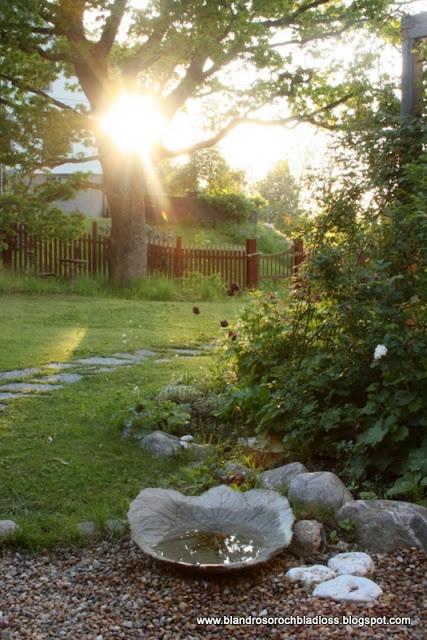 Solnedgång i början på juni. Sunset in June! Bland rosor och bladlöss trädgård betong