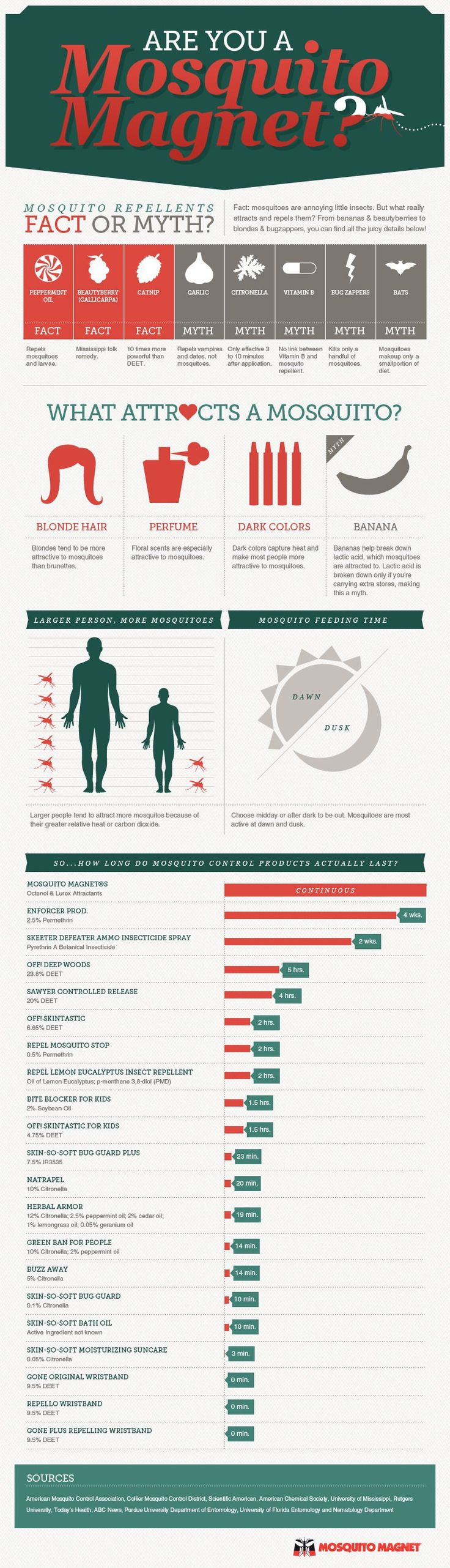 Are You A Mosquito Magnet [INFOGRAPHIC] – Infographic List