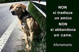 Risultati immagini per aforismi sui cani