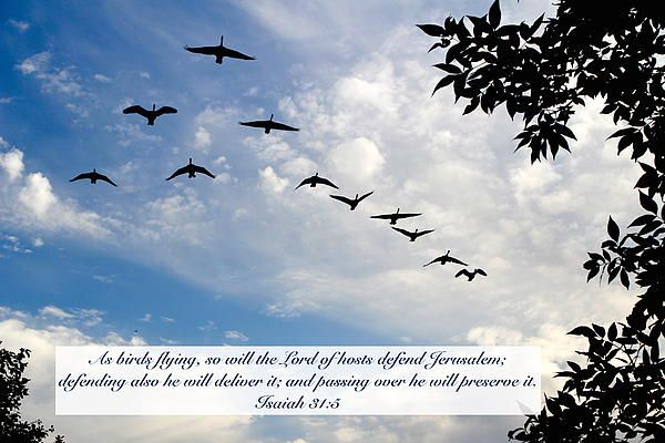 Image result for Isaiah 31:5