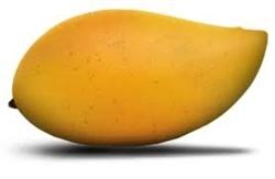 Totapuri Mango Puree    Applications Areas:  puree