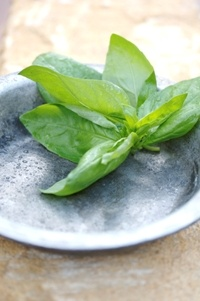 Fresh basil  from Food from the heart. Courtesy of Lapa Publishers, photo by Adriaan Vorster