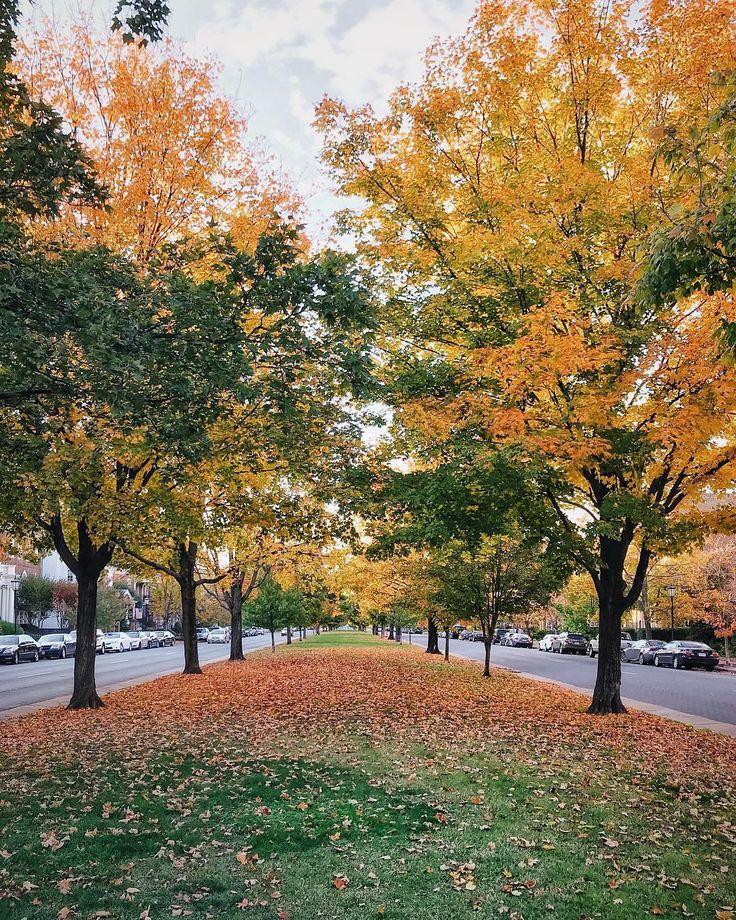 Beautiful Autumn Sunset: Best 25+ Autumn Scenery Ideas On Pinterest