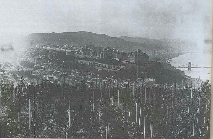 1890 Gellérthegyi szőlők