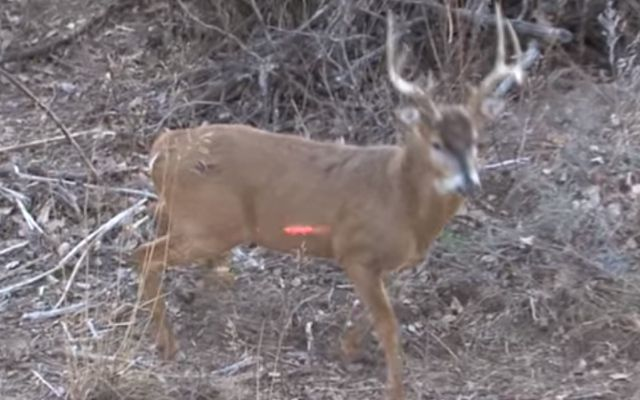 bow hunting kill shots, bow hunting video, bowhunting, deer, hogs, Hunting (Interest), Kill shots, lumenok, mathews, whitetails, wildlife