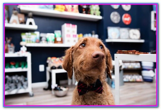 Dog Grooming Certification Ny A New York Dog Groomer Is