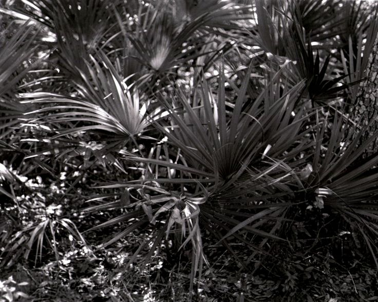 florida plants