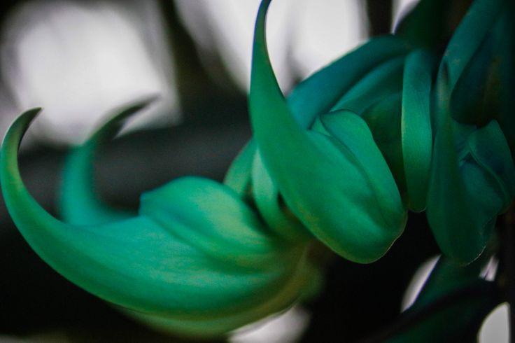 Greenish Flower