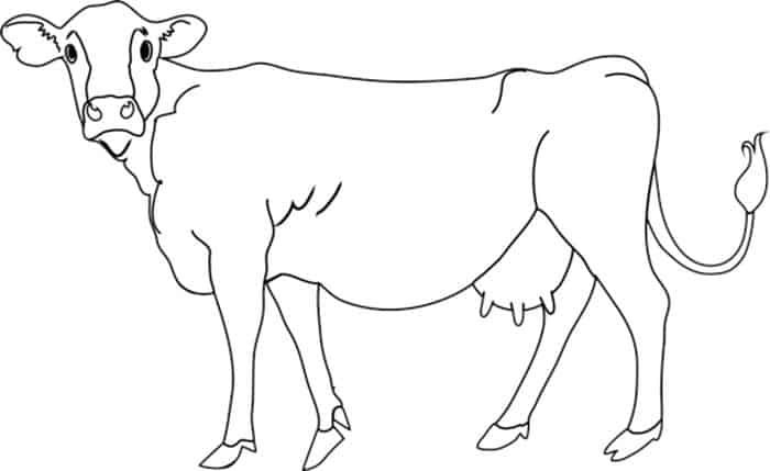 Jersey Cow Coloring Pages Cow Coloring Pages Cute Baby Cow Elephant Coloring Page