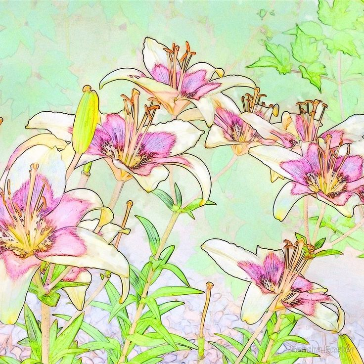Pink And White Lilies - Digital Watercolor