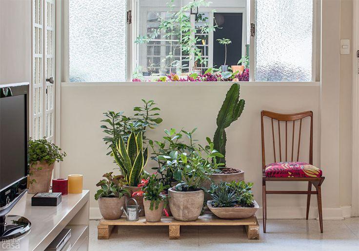 O arranjo inclui diversas suculentas, a exemplo de (1) folha-da-fortuna (Kalanchoe pinnata), (2) rosa-do-deserto (Adenium obesum) e (3) planta-jade (Crassula argentea); alguns cactos, como (4) flor-e-maio (Schlumbergera truncata) e (5) cereus (Cereus hexagonus); e ainda uma (6) espada-de-são-jorge (Sansevieria trifasciata) e duas (7) clúsias (Clusia fluminensis).