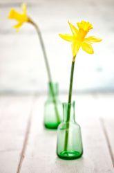 Science Fair: The Science Behind Keeping Flowers Fresh