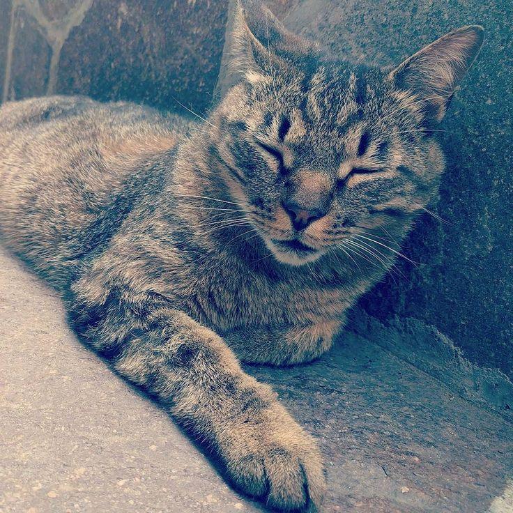 Buongiorno!! #cats #vda #chrzhcdc #fenis #castellodifenis #hotelcomtesdechallant #amici #gatti #goodmorning #invda #ilovecats