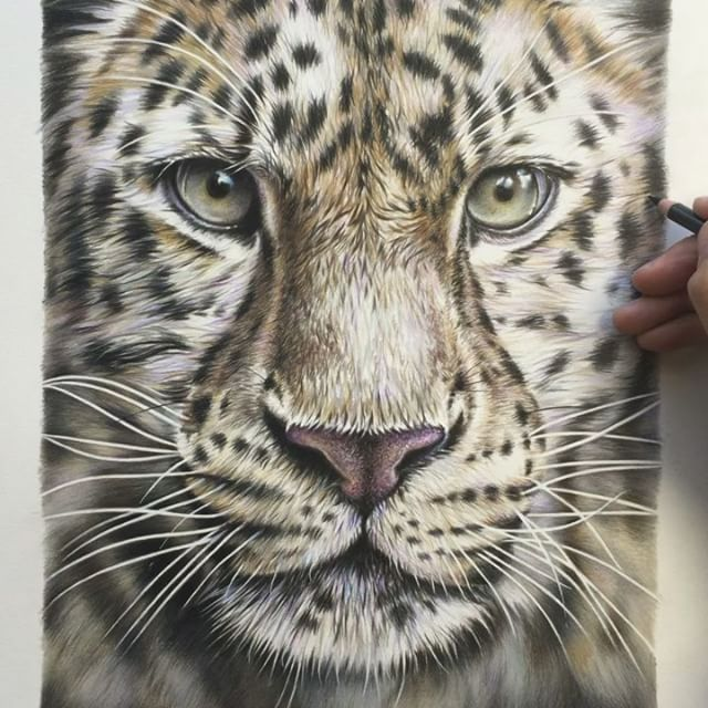 Final touches to finish this leopard drawing today, hope you guys like him now to find a name!?? Have a great weekend :-) #leopard #pencil #drawing #art #artist #wip #cat #eyes #bigcat #amur #whiskers @fabercastellglobal @wildlifeplanet