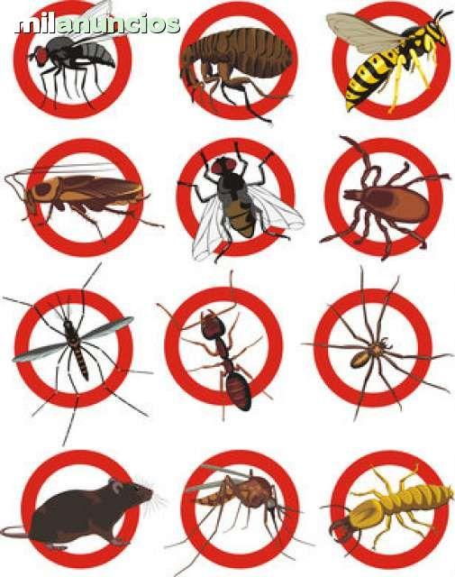 . Control de plagas, DDD.desinfecci�n, desratizaci�n, desinsectaci�n Empresa registrada en el departament de salut. CERTIFICADOS OFICIALES. eliminacion de cucarachas, hormigas, ratas, chinches, mosquitos, microrganismos. tratamientos de la madera, carcoma,