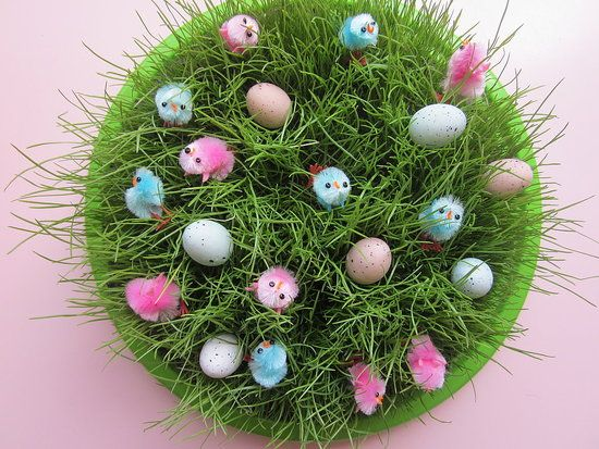 Growing Grass with your Kids.  Time for an Indoor Craft/Project! Great for the kiddies!