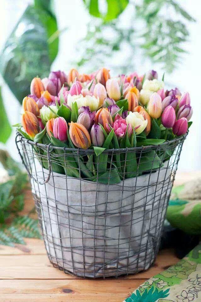 Tulpen in mand
