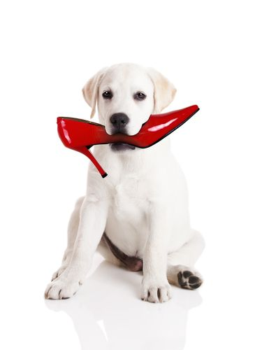 Puppies need training, rules, affection, play and leadership. So how important and valuable are puppy training classes?