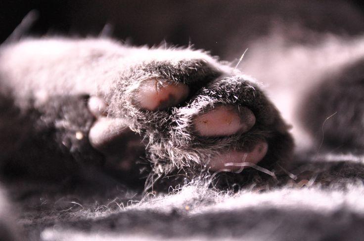 Cat paw.