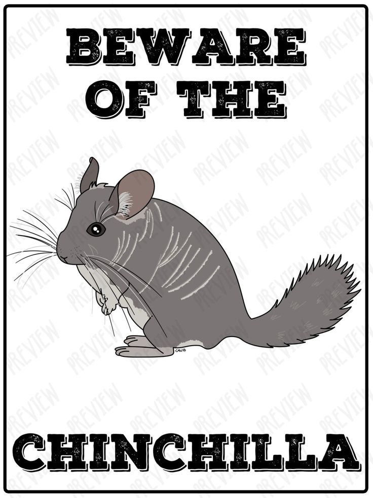 Metal Sign - Beware of the Chinchilla! Pet - Animal - Illustrated - Pets by LemonsLovelyLoot on Etsy