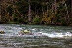 Skagit River — Washington Trails Association