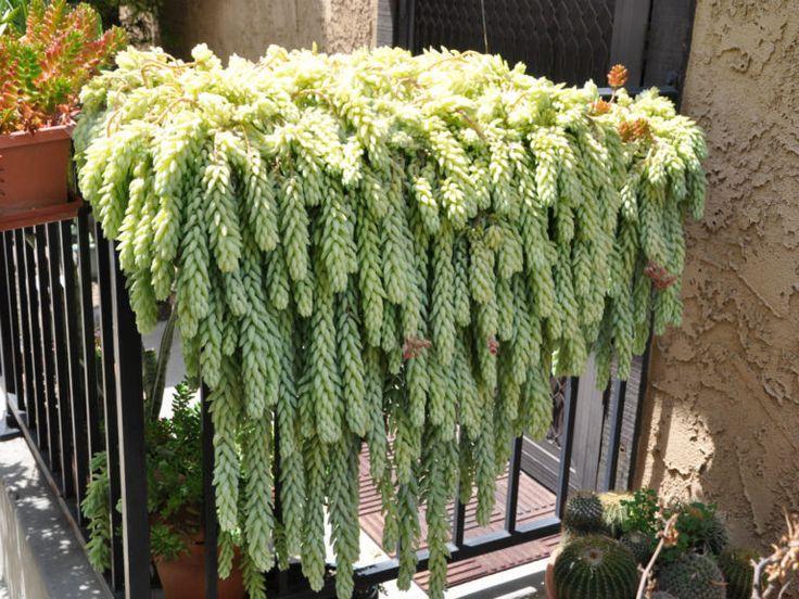 337 best succulent cactus growing propagation images on. Black Bedroom Furniture Sets. Home Design Ideas