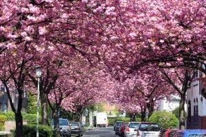 Die schönsten Straßen Krefelds