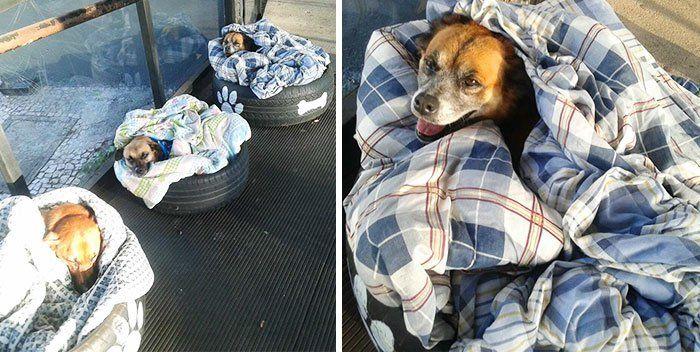 Los empleados de una estación de autobuses decidieron hacer algo increíble para ayudar a los perros sin hogar, les brindan comida y abrigo.