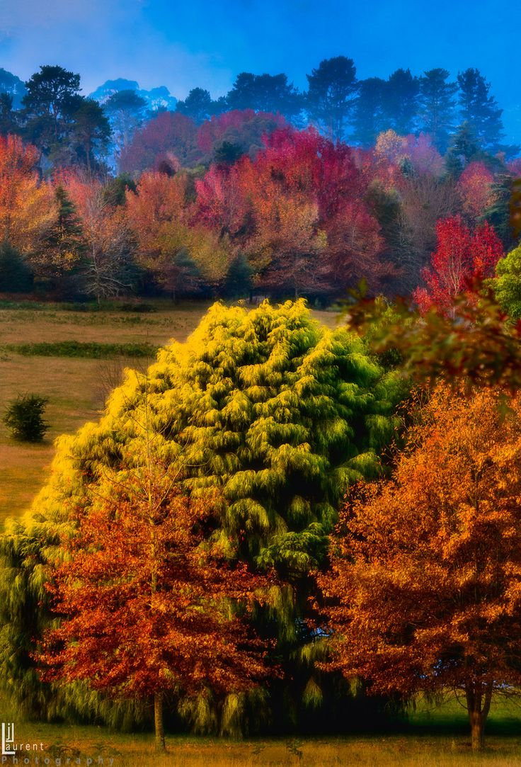 Autumn Colors in the Blue Mountains,  Australia