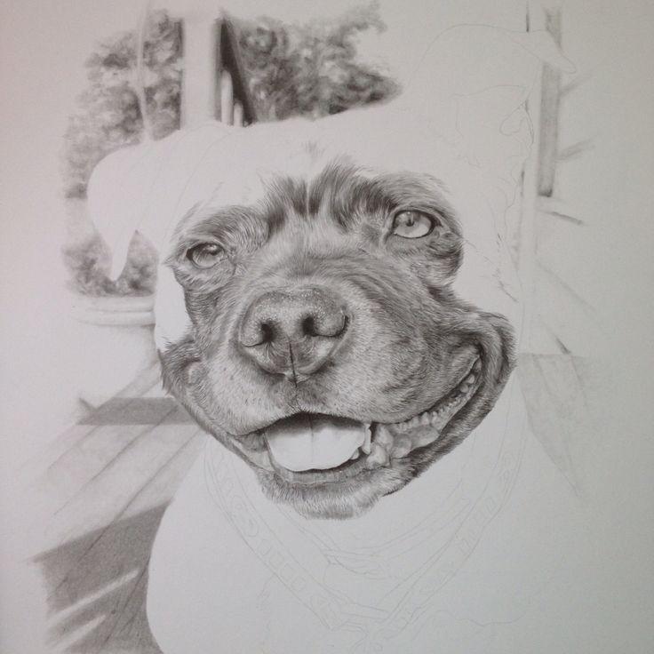 #staffy #petportrait #pencil #staffordshirebullterrier #illustration #drawing #dog