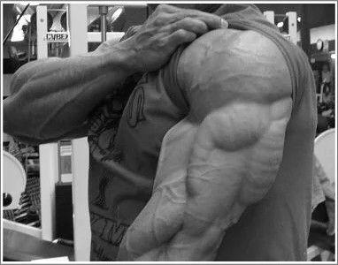 """Ударные упражнения для трицепсов от Боба Вульфа  Вы думаете, большие руки, это большие бицепсы? Конечно, приятно невзначай согнуть руку на пляже и сразить окружающих наповал! И все же это большая ошибка - посвящать все свои """"ручные"""" тренировки """"бомбежке"""" бицепсов. Мало кто знает, но две трети объема рук приходится совсем на другую мышцу - трицепс! Так что, если вы хотите заполучить действительно большие руки, которые не лезут ни в один рукав, вам надо с головой уйти в накачку трехглавой…"""
