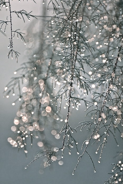 Water droplets on the tree... Amazing.