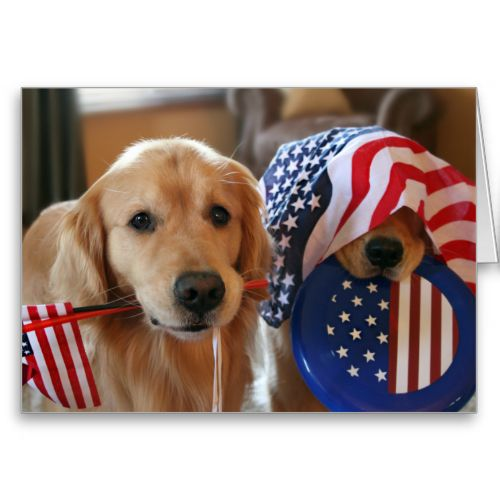 Golden Retriever Independence Day Greeting Card by #AugieDoggyStore