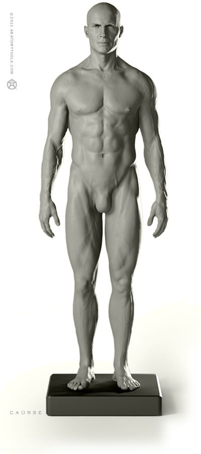 """Male Proportional figure: v.2   - basic study & general use   1:6 life-size, yet incredibly detailed, this desktop model shows ideal proportions & surface anatomy of the male human body. Clearly shows the influence of underlying muscle, bone & fat. Ideal reference & study tool. Recreated from a live athlete. Realistic hand-painted eyes. Aprox. 11.75""""H x 2""""D x 3.5""""W"""