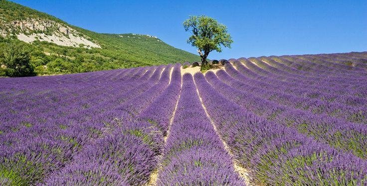 Het lavendelseizoen staat op het punt van beginnen! De ideale gelegenheid om de Provence in te duiken. Maar in plaats van met de auto langs de lavendelvelden te toeren, is het nog veel leuker om op de fiets te stappen, om de kruidige geuren direct op je in te kunnen laten werken. De organisatie Grande …