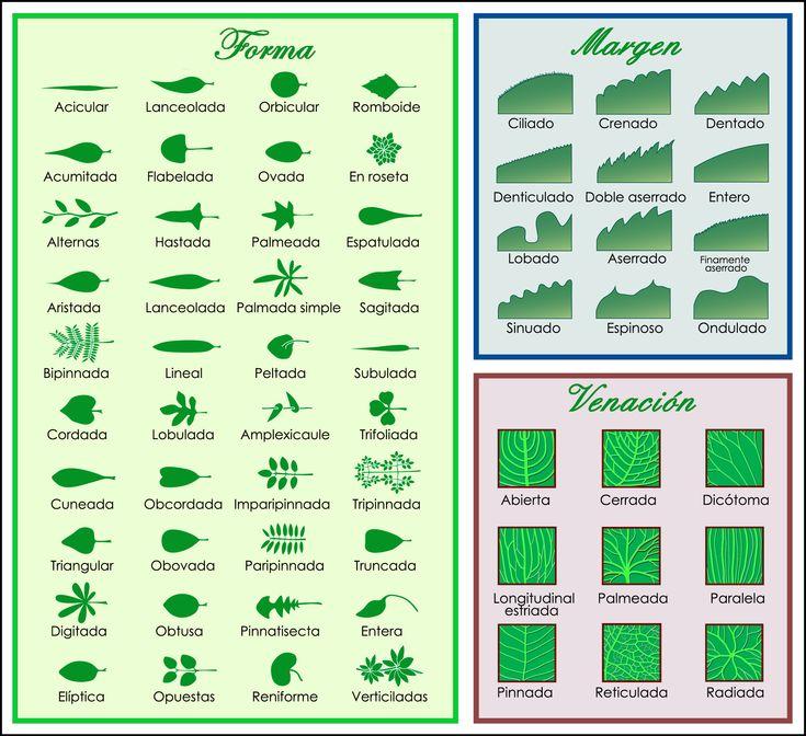 Formas de las hojas