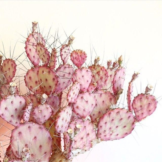 Absolutely swooning over this pink cactus.