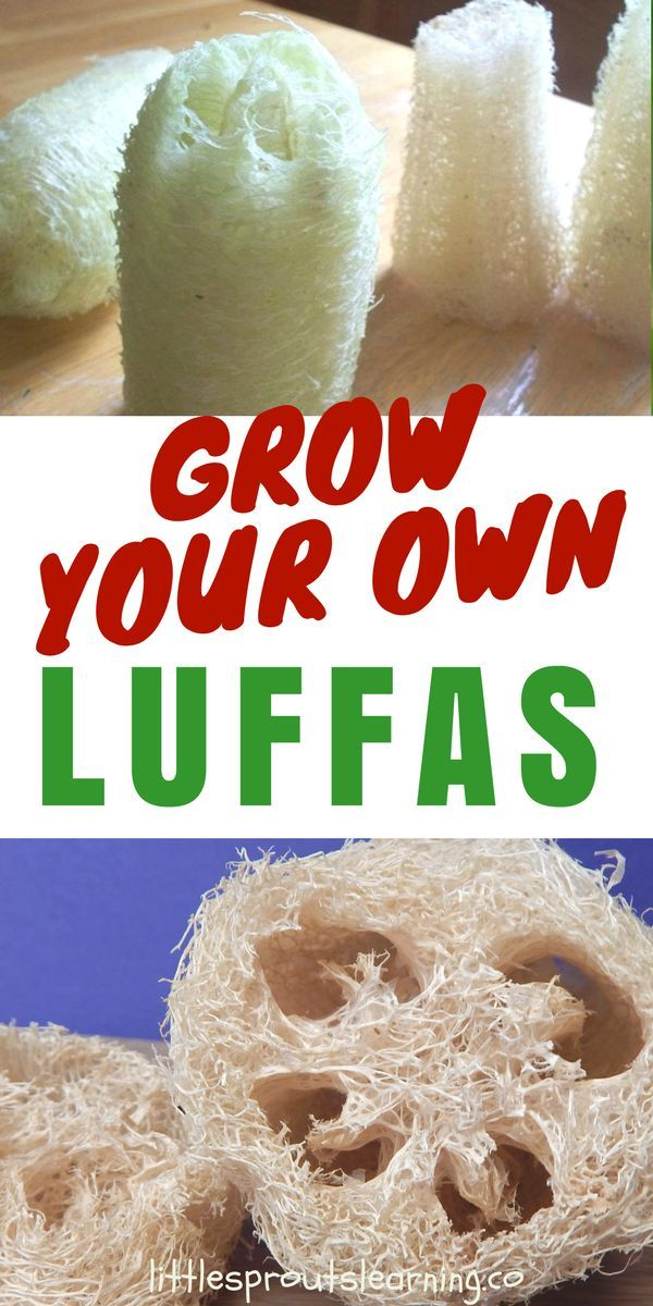 growing luffas is a unique and interesting experience there are a ton of uses for