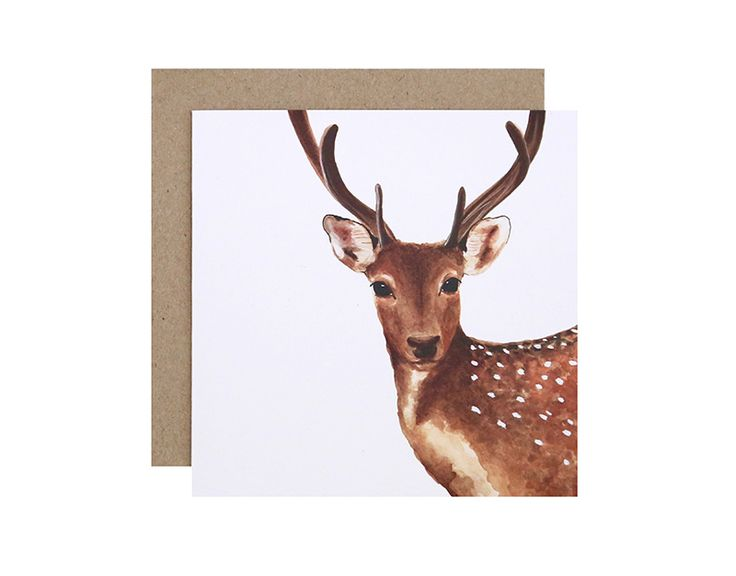 Dotty the Deer Greeting Card  Birthday, Get Well Soon or Congratulations?  For Me By Dee greeting cards are perfect for any animal lover, for any occasion!  Created and printed in Melbourne, Australia