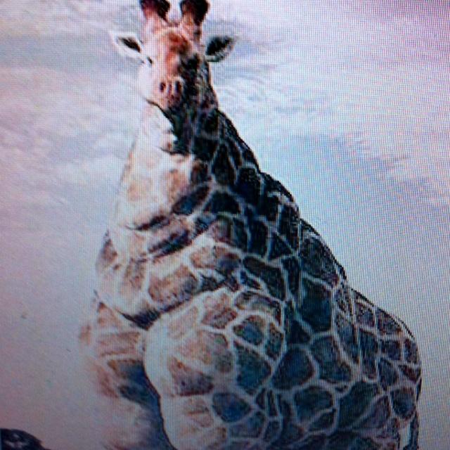World's Fattest Giraffe. She Is 22' And Runs 35mph Taller