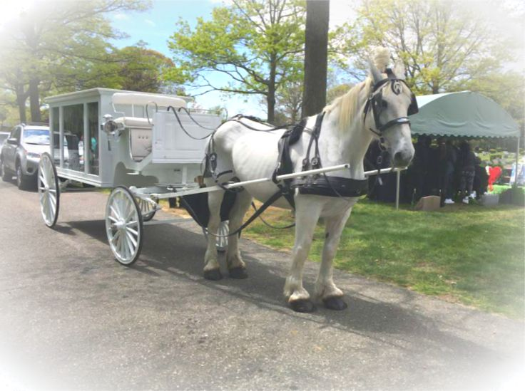 Funeral in amityville li ny with our white horse drawn