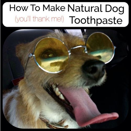 how to make natural toothpaste for dogs