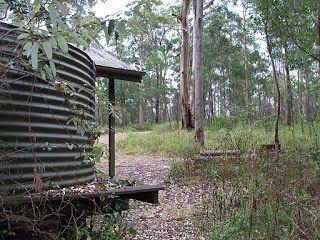Bushwalking in Brisbane Forest Park (D'Aguilar): half-day