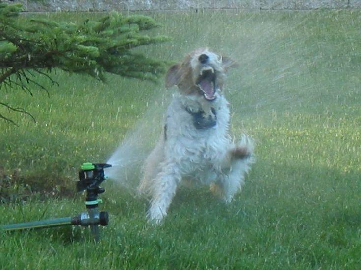 картинка собака с вентилятором есть хороший фрезеровщик