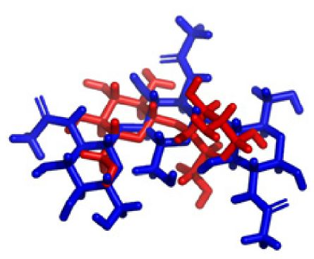 Figure 9 Representation of docked complex of chitin with chitosan oligosaccharide and its hydrogen and hydrophobic interaction (chitin is in blue color, chitosan in red color).