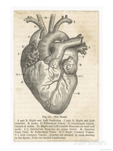 I just bought a print of this on dictionary paper for $10! Anatomy of the Heart