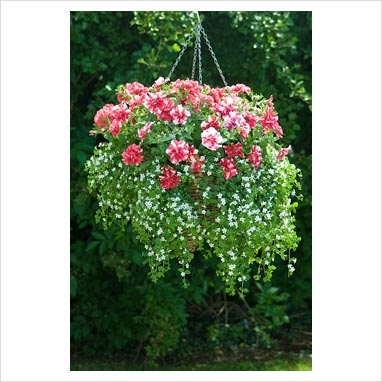 how to keep hanging baskets from drying out