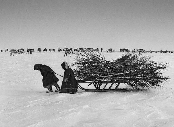 Nenets people hauling firewood, Siberia, photo by Sebastiao Salgado