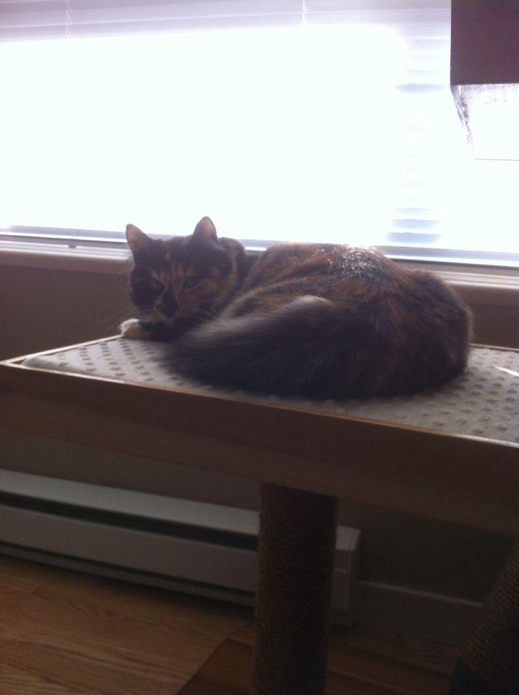 Penny enjoying her day!